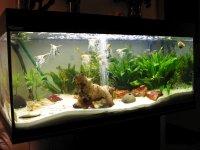 die aquaristikfibel die aquaristikfibel online. Black Bedroom Furniture Sets. Home Design Ideas